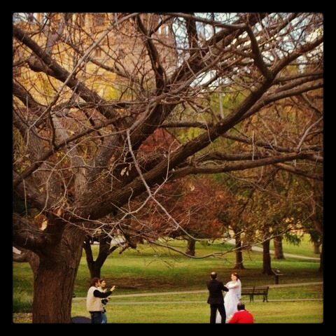 Wedded bliss at Capitol hill.